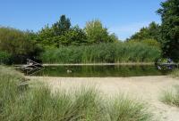 Schwimmteich mit Granderwasser