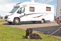 Campingurlaub mit dem Hund