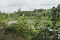 Wunderschöne Natur am großen See