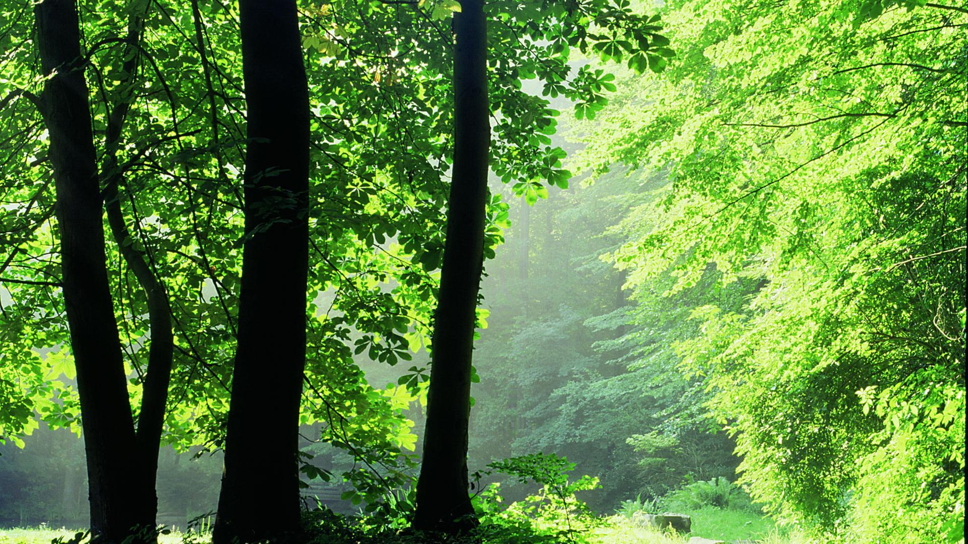 Osnabrücker Land Waldlichtung