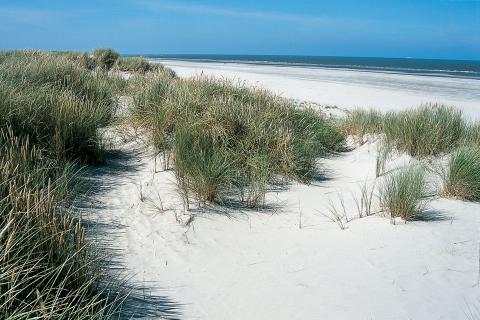 Dünen von Langeoog