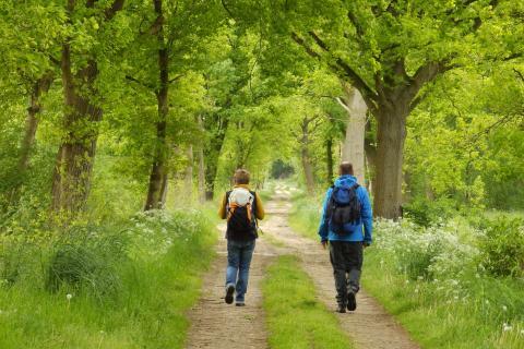 Nordpfade Hinterholz und Hohenmoor, naturnaher Wegabschnitt